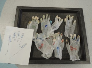 The seed gloves from the grade 3 germination experiment.