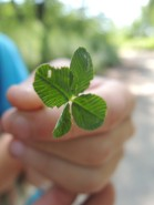 One of our campers found a totally legitimate four-leaf clover.